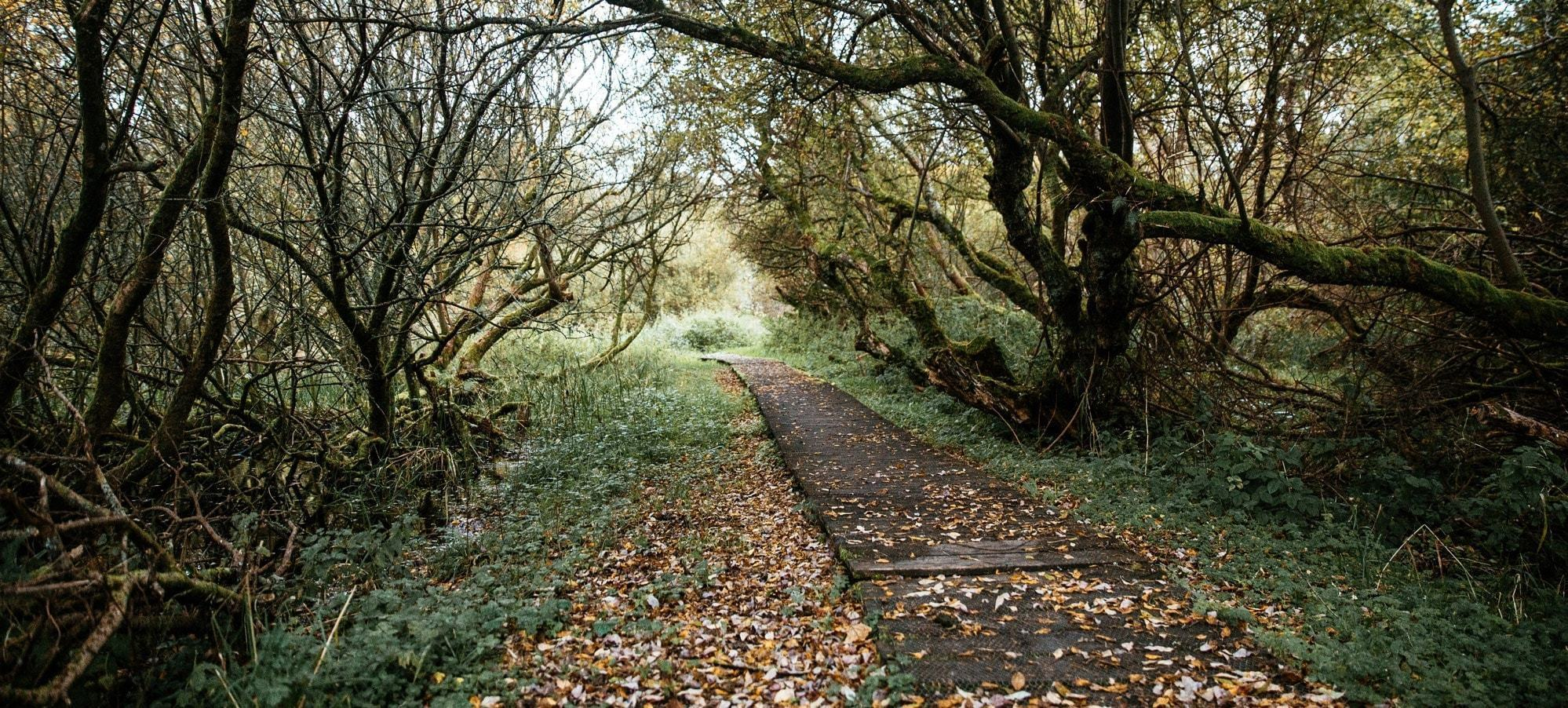 Photo d'un chemin