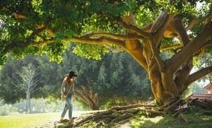 Marche en pleine nature